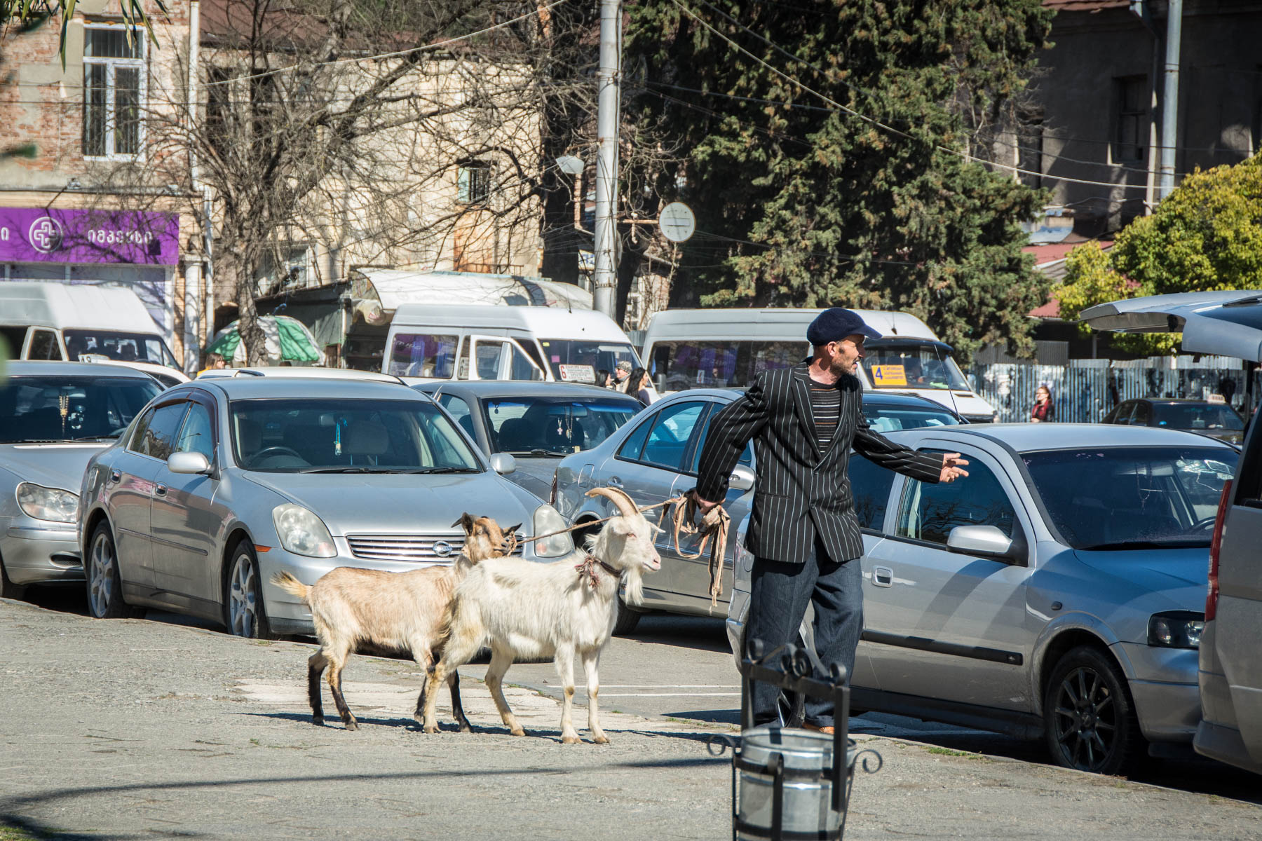 Man with goats in traffic in Kutaisi Georgia