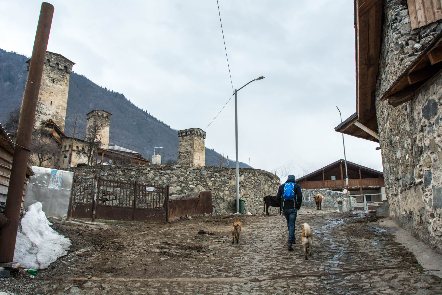 Stray dogs and Svan towers in Mestia Svaneti Georgia