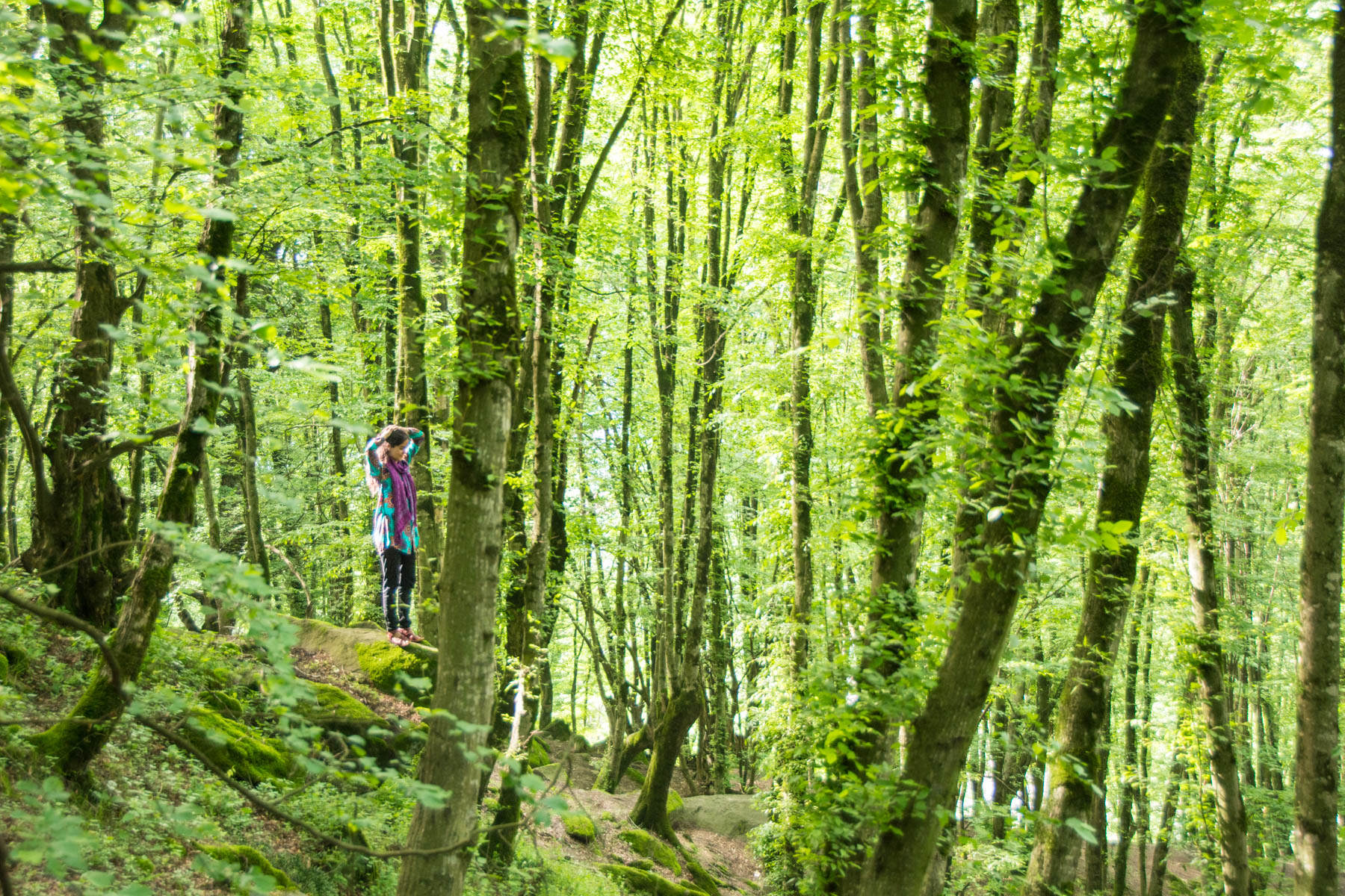 The forests of Gorgan in northern Iran