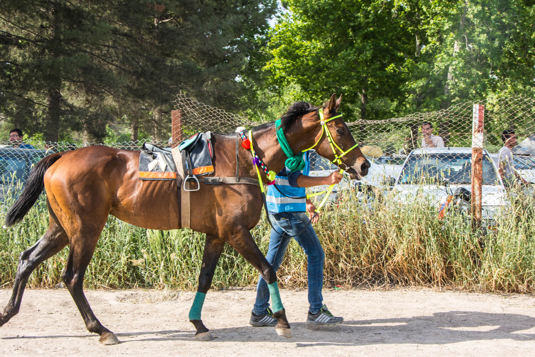 A stable hand leading a horse at the horse races in Gonbad-e Kavus