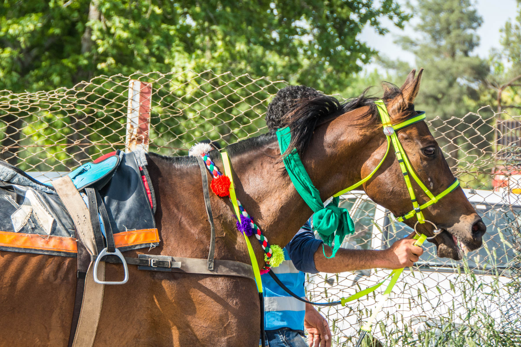 Horse being led at the races in Gonbad Kavus, Iran
