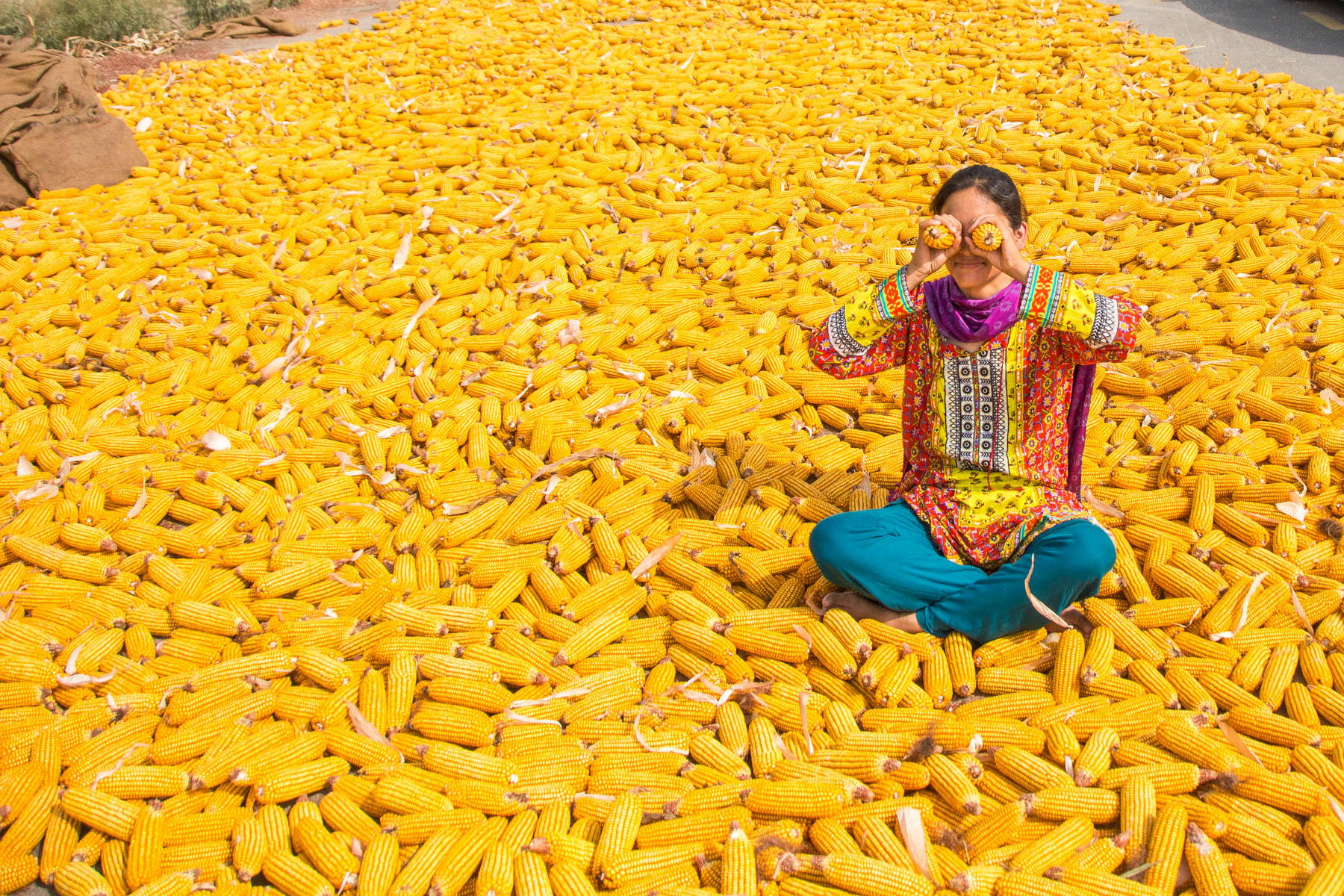 Alex of Lost With Purpose swimming in a sea of corn in Lahore, Pakistan