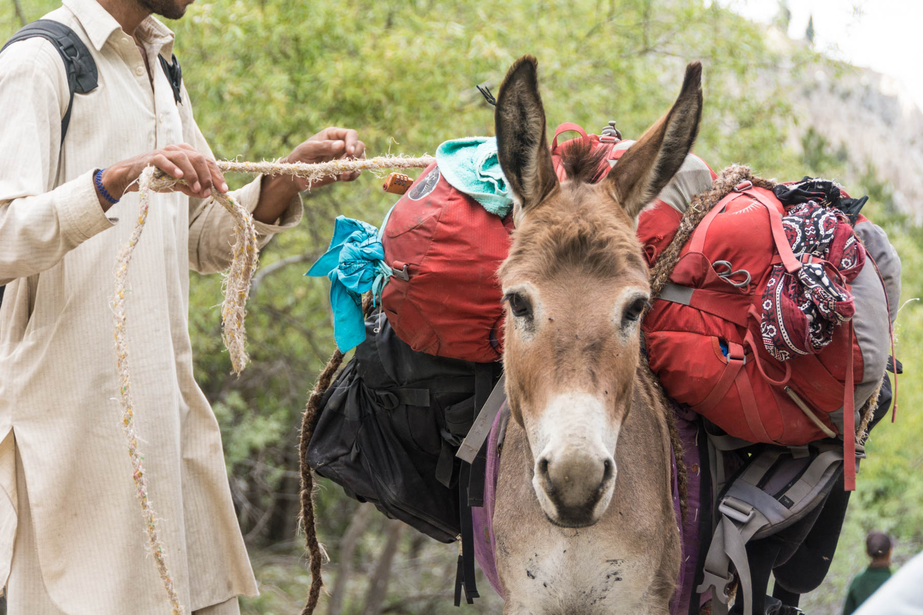 A donkey and porter on the way to Fairy Meadows, Pakistan