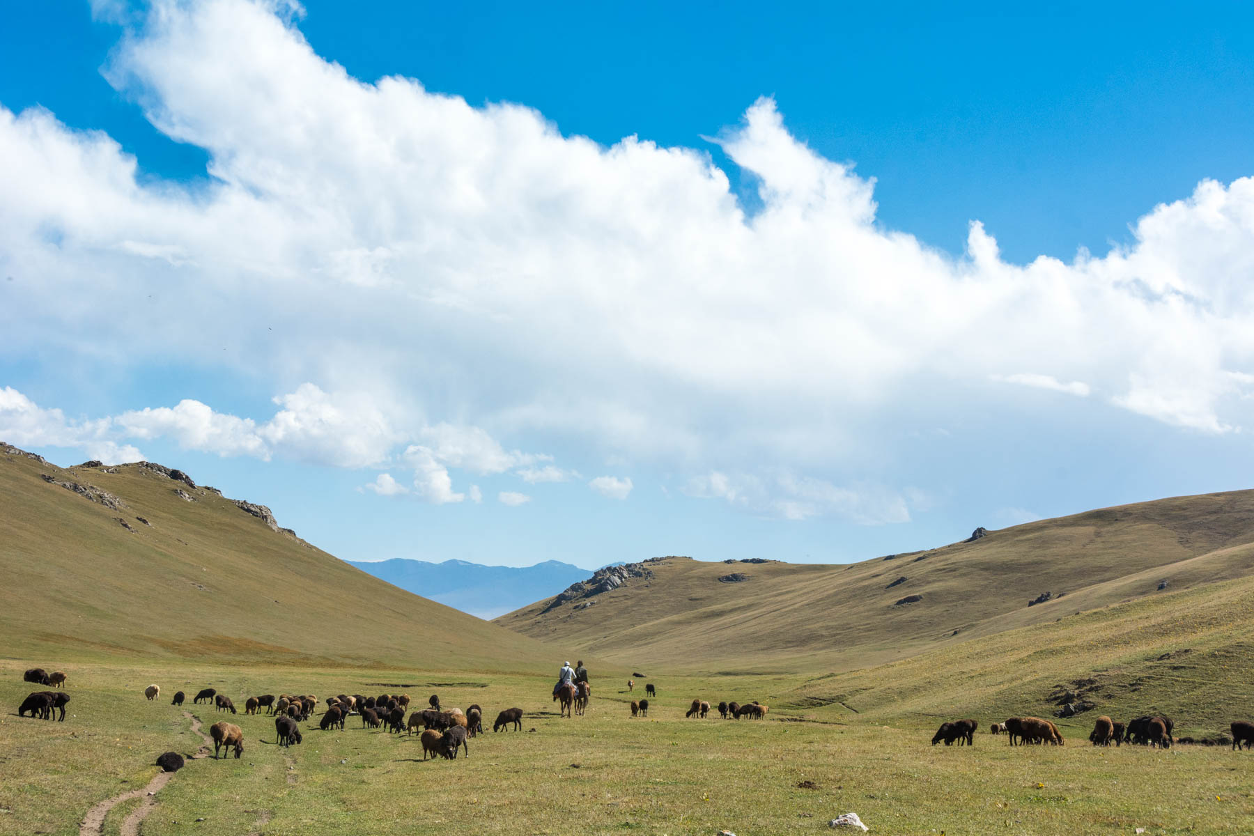 Grazing animals near Song Kul lake in Kyrygzstan - Lost With Purpose