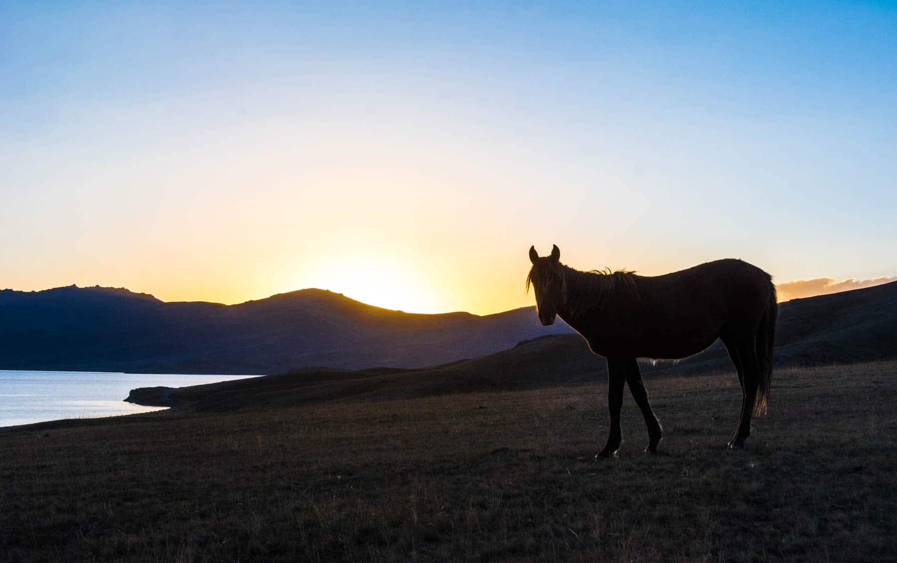 The sun setting behind a horse at Song Kul lake in Kyrgyzstan - Lost With Purpose