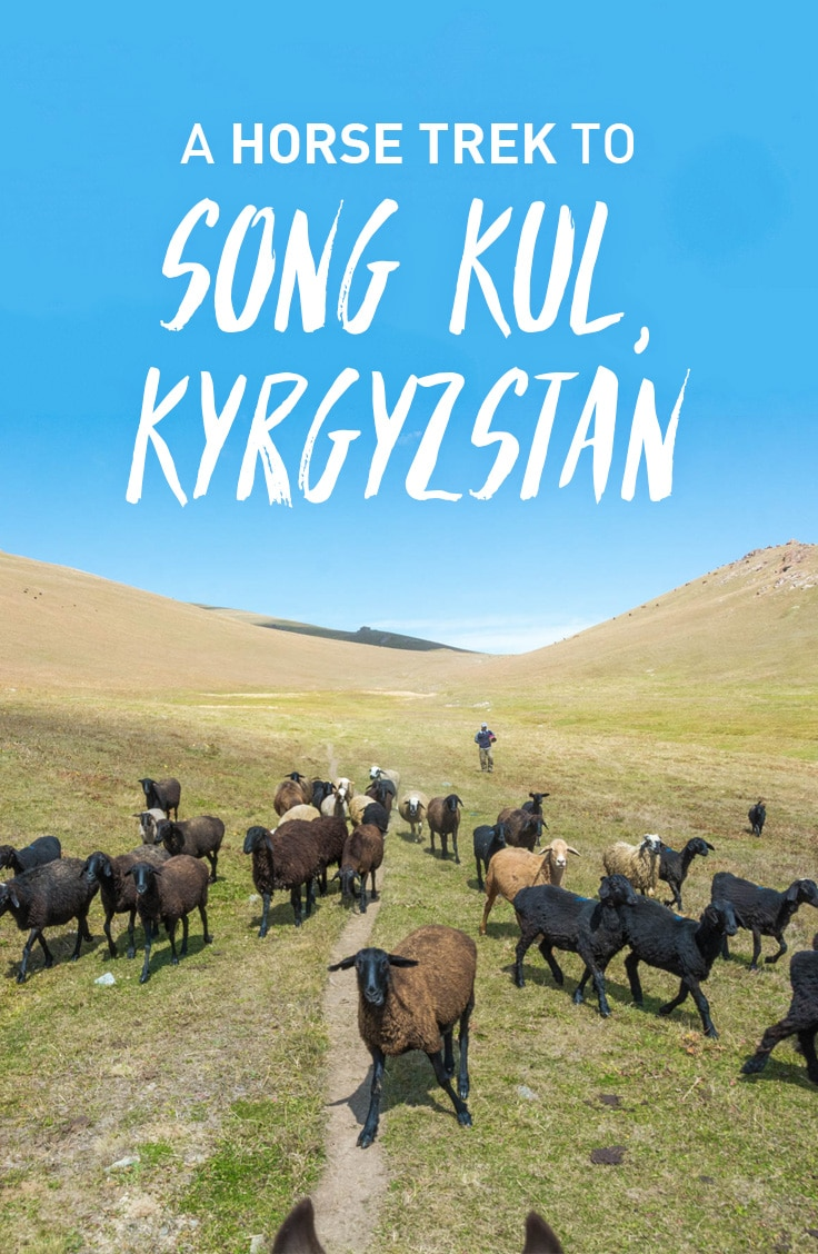 A disastrous horse trek with a happy ending. Read on to learn how to save money by independently arranging a horse trek to Song Kul lake in Kyrgyzstan.